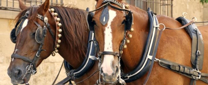 Pferde_Schmal